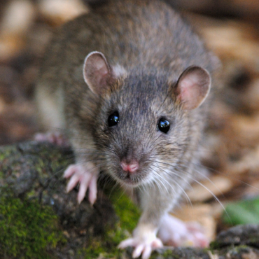 Richmond Pest Control Rodent Extermination Company in Atlantic City NJ