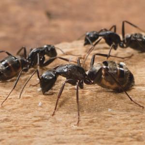 Richmond Pest Control Extermination Company Serving Atlantic County NJ