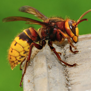 Richmond Pest Control Insect Extermination Services Southern NJ