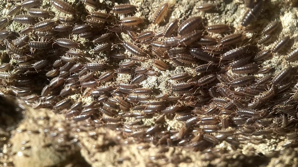 Richmond Pest Control Exterminator Company Serving Southern NJ
