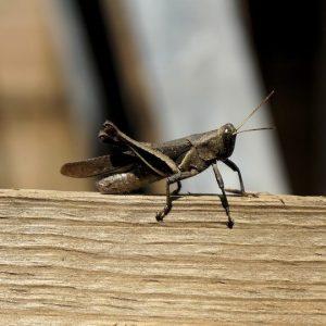 Richmond Pest Control Company Brigantine NJ
