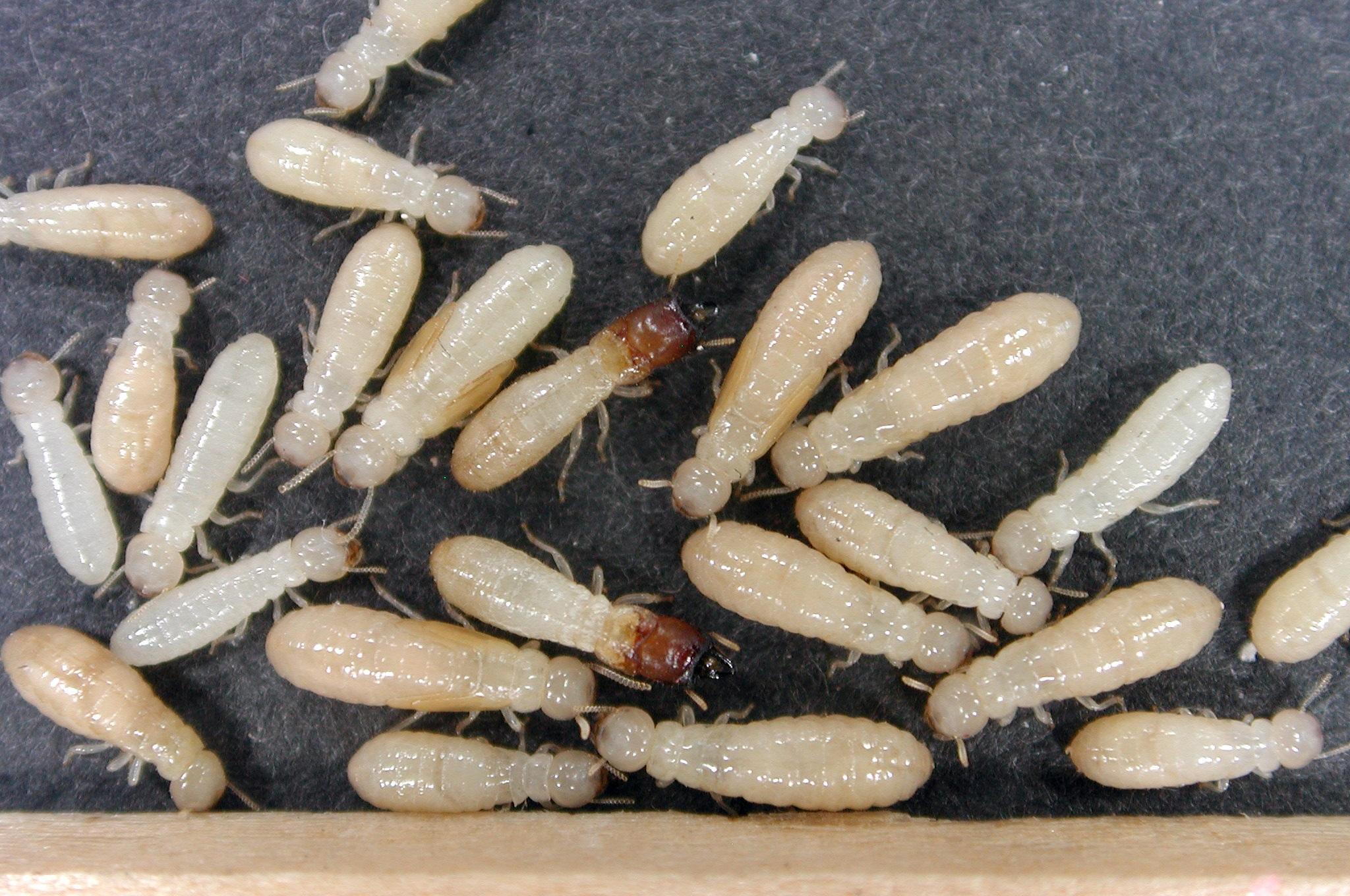 Pest Control Services in Atlantic County NJ