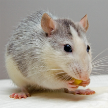 Richmond Pest Control Rodent Pest Control Services Atlantic City