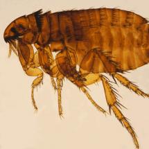 Richmond Pest Control Professional Extermination Services Atlantic City NJ