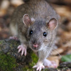 Richmond Pest Control Rodent Professional Extermination Services Atlantic City NJ