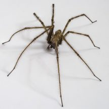 Richmond Pest Control Professional Extermination Services Atlantic City New Jersey