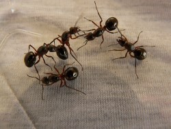 Richmond Pest Control Ant Control Extermination Company in Atlantic City NJ