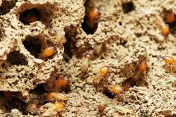Richmond Pest Control Termite Extermination Services Atlantic City NJ