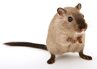 Richmond Pest Control Rodent Control Company in NJ