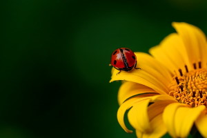 Richmond Pest Control Interesting Insect Facts