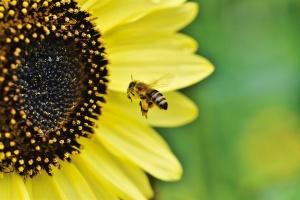 Richmond Pest Control Fun Honey Bee Facts